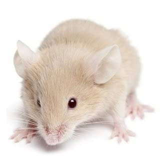 Reptile Centre Frozen Mice Medium 16-22g, Barcode 10-pack 7