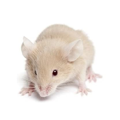 Reptile Centre Frozen Mice Medium 16-22g, Barcode 10-pack 1