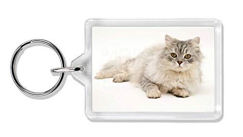 Advanta - Keyrings Silber Chinchilla Perserkatze Foto Schlüsselbund TierstrumpffüllerGeschenk -