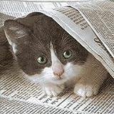 Serviette Paper & Design Motiv : Good news ? - Katze mit Zeitung 20 Servietten pro Packung