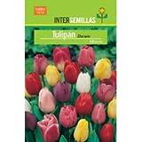 Bulbo Tulipán Darwin Mezcla