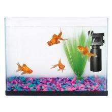 Fish 'R' Fun - Kit de acuario para principiantes