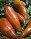 Bobby-Seeds Tomatensamen Andenhorn - Andine Cornue Portion