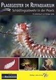 Plagegeister im Riffaquarium: Schädlingsabwehr in der Praxis