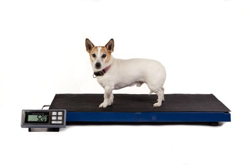 veterinary-scale-precision-platform-lc-vs-180-large-lightweight-vet-scale-ideal-for-vet-clinic-use-a
