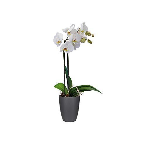 elho Brussels Diamond Orchidee Hoch Blumentopf 15 cm