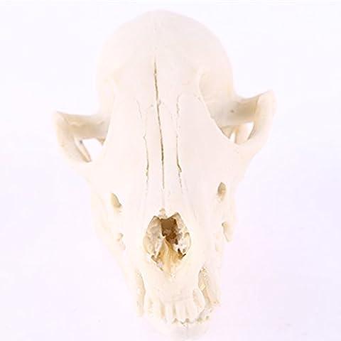 Gazechimp Künstliche Fuchs Schädel Modell für Wohnzimmer Lehre Sammler Aquarium Dekoration , 7.5 * 7 * 14,5 cm , Weiß