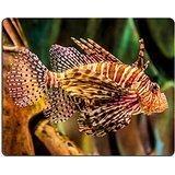 luxlady Gaming Mousepad Bild-ID: 18795899Rotfeuerfisch in einem Dubai Aquarium Feuerfische mombasae petrois volitans Rotfeuerfisch turkeyfish Drachenkopf firefish