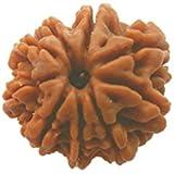Himalaya Rudraksha Anusandhan Kendra Brown 9 Mukhi Wooden Rudraksha for Men and Women