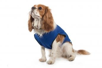 Ancol Cooling Dog Vest Coat, Medium-P