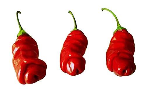 "Penis Chili Rot 10 Samen (Peter-Pepper) ""Der Blickfang im Garten"" >>>Eignet sich hervoragend als Geschenk<<<"