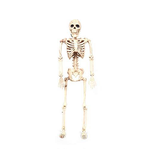 ▷ lI❶Il Skelette & anatomische Modelle Test + Vergleiche Top ...