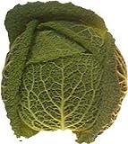 Produkt-Bild: amorebio Bio Wirsing, neue Ernte (1 x 1 Stk)