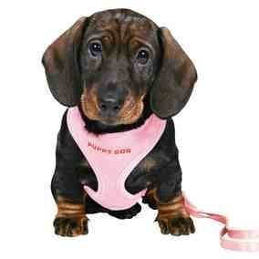Trixie 15567 Puppy Harness, 23-34 cm L: 2 m, Pink