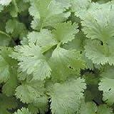 seekay Cilantro Verde AROMA Appx 3000 Semilla - 500 seeds