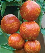 Red Zebra Tomaten-Samen! Mehr als 200 Arten von Tomaten in unserem Speicher! Comb S/H