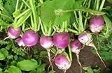 Las semillas de nabo, púrpura top blanco Globe, no GMO, variedad de tamaños, (1000)