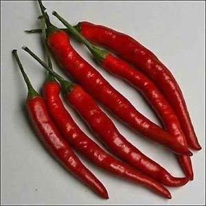 Keim Seeds: Pfeffer Cayenne Lange rote Gemüsesamen (Capsicum Annuum) 400Seeds -