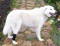 Pets-N-Us Sprunggelenkbandage/Stützbandage für Hunde, Größe S, elastisch, zum Wickeln