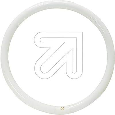 OSRAM Lumilux T9 Tubo Fluorescente, GR10q, 22 watts, Blanco (Cool White), 21.6 cm