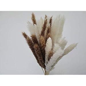 MARAZ Pampasgras klein natürlich getrocknet als Deko für Hochzeit Außenbereich Wohnzimmer Farben weiß braun Naturfarben Pampas Gras Pflanzen Blumen Trockenblumen Boho Vasen Federn (Naturbraun)