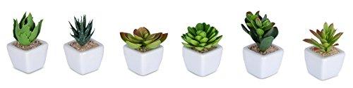 6er Set Sukkulenten B x H 4,5x9cm Kunstpflanze Grün Weiß Kunstblume Deko - 2