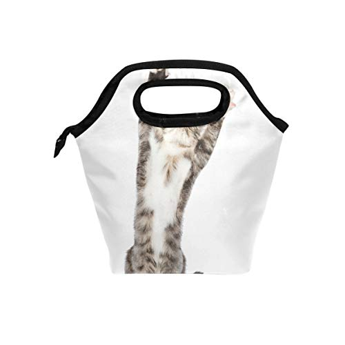 SKYDA Insulated Lunchpaket Playful Tabby Kitten In Front Looking Up Lunch Tote Reusable Cooler Bag Organizer Portable Reusable Lunch Tote -