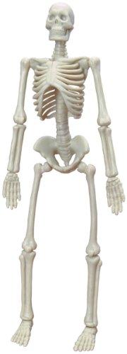 Imagen principal de Miniland - Skelet: Humano (99068)
