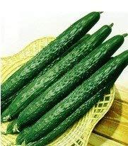Shoppy Star Shoppy étoiles: SD0499-0005 vert japonais Emeraude concombre Graines de légumes, graines végétales vivantes, les semences non génétiquement modifiés (26 graines)