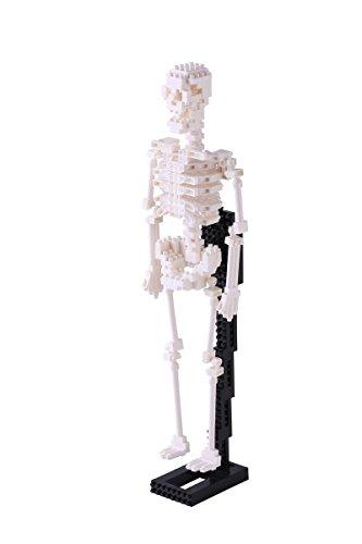 nanoblock NBM-014 - Human Skeleton Model, Minibaustein 3D-Puzzle, Middle Series, 600 Teile, Schwierigkeitsstufe 5, für Experten (Bausteine Micro)