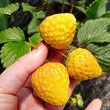 Gelbe Erdbeere 20+ Samen (Der Blickfang im Garten)