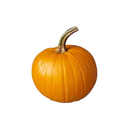 1 Kürbis für Halloween (ca. 2 kg schwer) - perfekter Halloween-Kürbis mini - ideal zum Schnitzen für Kinder prima in der Herbst und Winterzeit
