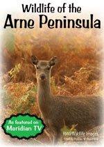 wildlife-of-the-arne-peninsula