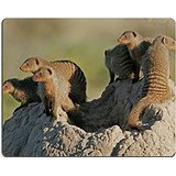 luxlady-gaming-mousepad-banded-mongoose-family-basking-on-a-termite-mound-etosha-national-park-namib