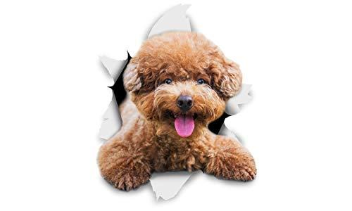 Winston & Bear 3D Hund Aufkleber - 2er-Pack - Lächeln braune Pudel für Wand, Kühlschrank braune Pudel Hund Aufkleber