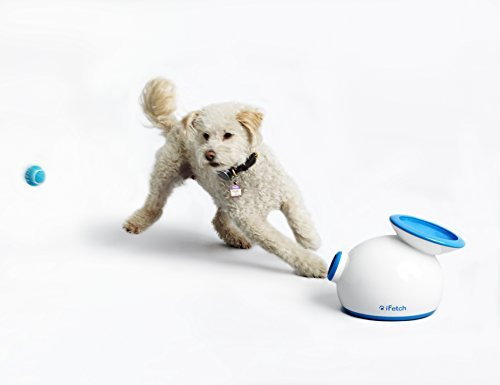 iFetch (Small) Interactive Ball Thrower for Dogs- Launches Mini Tennis Balls by iFetch 1