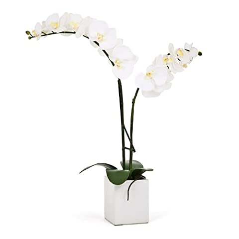 Torre & Tagus Orchid Potted Double Stem, 23Inch, White