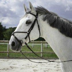 Riding World Trensenzaum mexikanisches Reithalfter Pony Schwarz