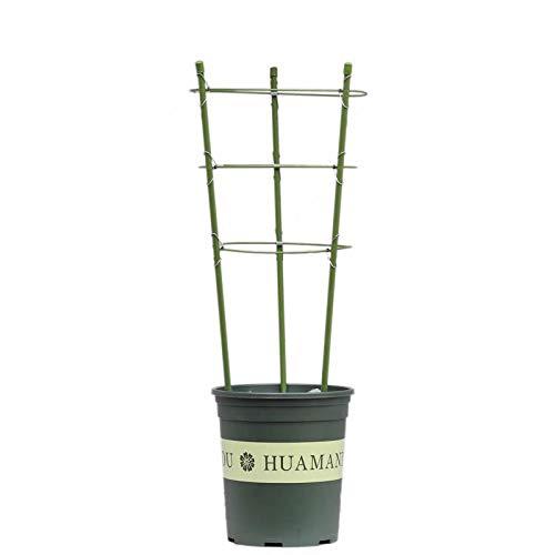 Supporto per piante da giardino, 2pezzi anello garden-graticcio flower sostegno pianta pomodoro gabbie supporto con 3anelli per fiori rampicanti ortaggi frutta