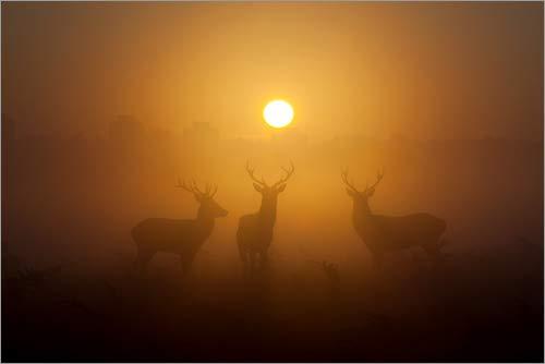 Posterlounge Acrylglasbild 30 x 20 cm: DREI Rote Hirsche am Morgen von Alex Saberi/National Geographic - Wandbild, Acryl Glasbild, Druck auf Acryl Glas Bild