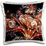 Ali Kabas - Marine Life - Open sea fan, Red Sea, Egypt - 16x16 inch Pillow Case
