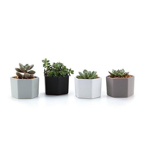 T4U Mini Esagono Lucentezza Superficiale Ceramica Vaso di Fiori Pianta Succulente Cactus Vaso di Fiori Contenitore Impianto Vasi Vivaio, Confezione da 4