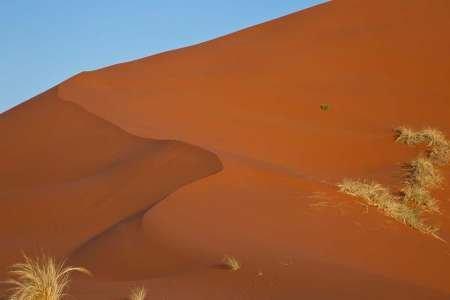 Feelingathome-STAMPA-ARTISTICA_x_cornice-Namibia,-Namib-Desert,-erbe-sulla-duna-di-sabbia-cm40x61-arredo-POSTER-fineart