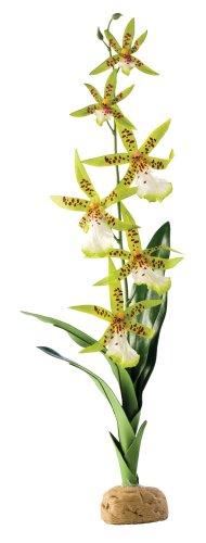 exo-terra-pt2991-spinnen-orchidee