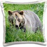 Albom Design Animals - Brown Bear in Alaska Photo by Rhonda Albom - 16x16 inch Pillow Case