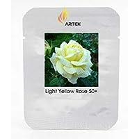 Visa Store Graines de fleurs de rose légère, 2018, paquet professionnel, 50 graines par paquet, Rose parfumée légère # LG00033