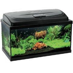 Aquarium 80 from Fish Around