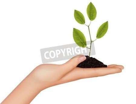 "Alu-Dibond-Bild 90 x 70 cm: ""Person holding a young plant. Vector illustration. "", Bild auf Alu-Dibond"