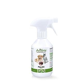 AniForte Flea EX Spray 250ml: Flea Treatment for Dogs & Cats that Rapidly Deters & Removes Parasites 31f0uXsmOnL