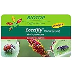 Biotop - 80 larves coccinelles adalia coccifly